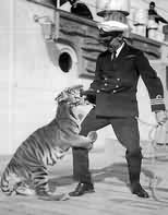 Cdr Pakenham with the Tiger